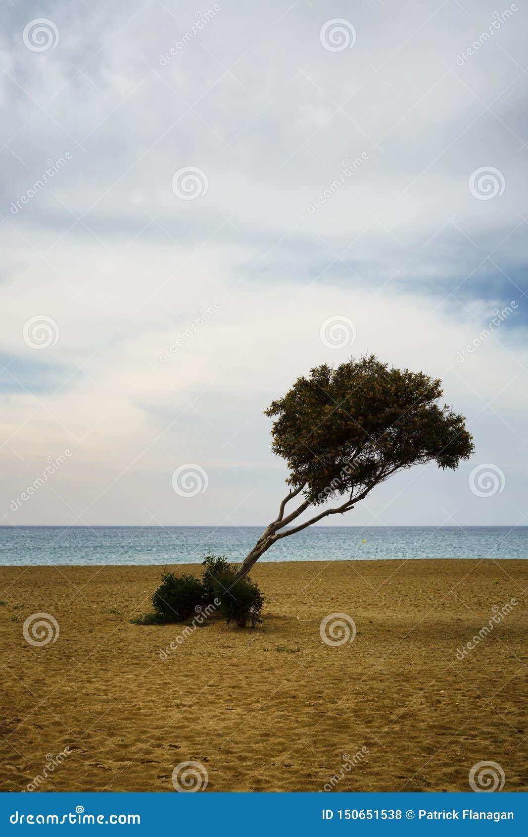 在一个沙滩的一棵孤零零树反对海