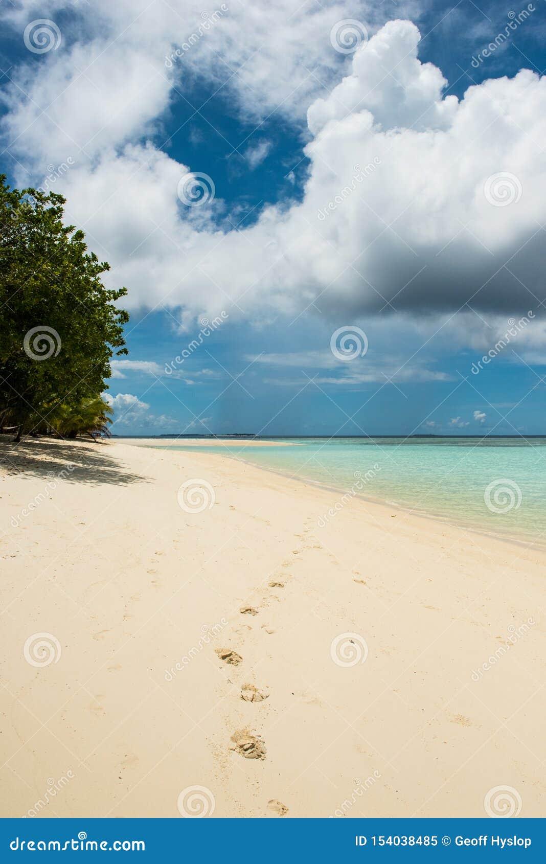 在一个沙滩的脚印