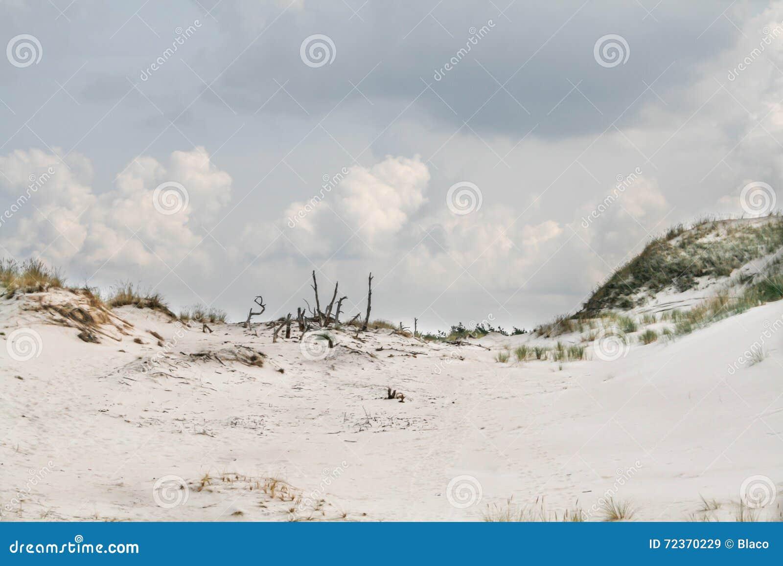在一个海滩的沙丘在Leba,波兰