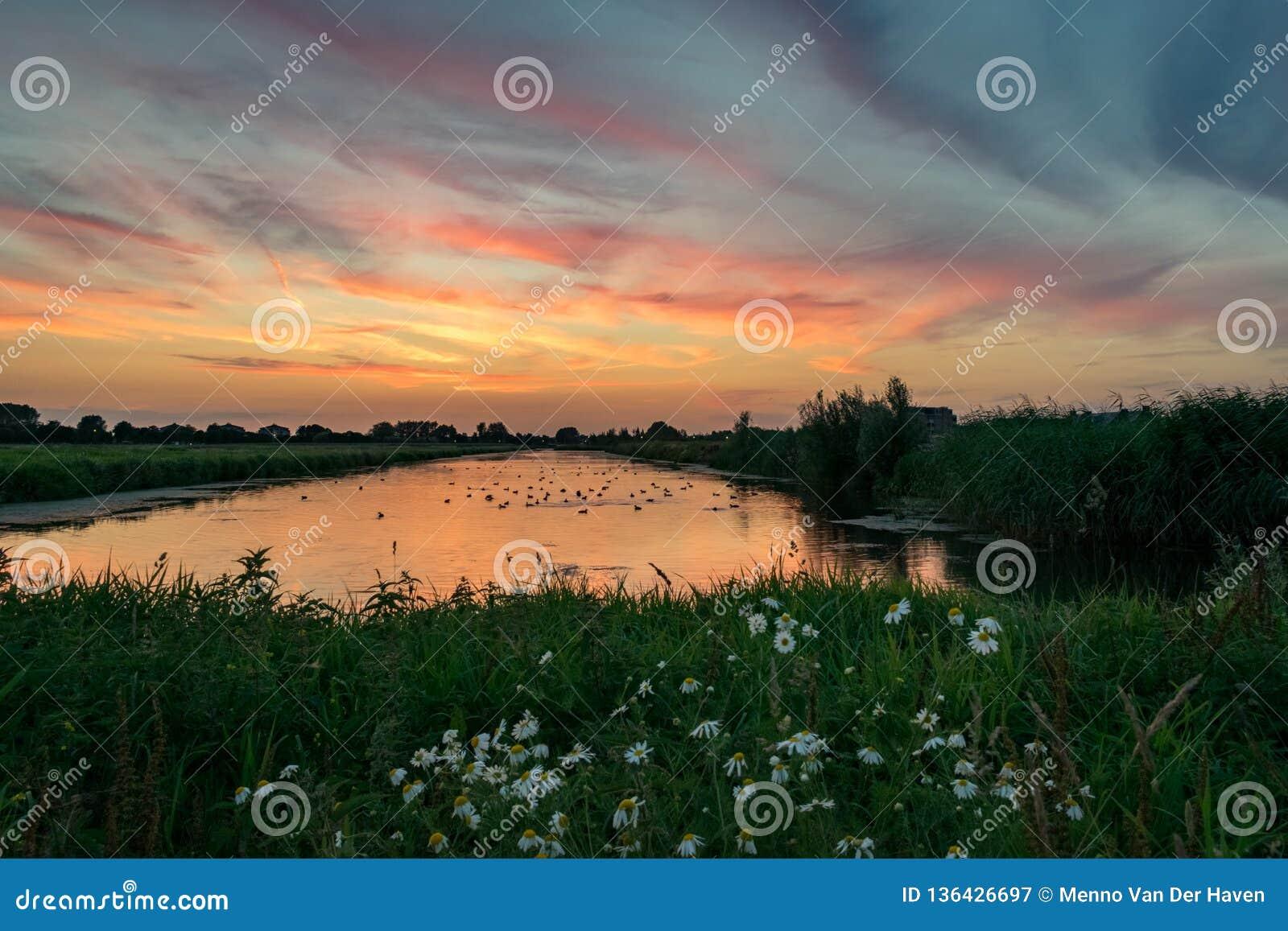 在一个湖的五颜六色的日落在有花的荷兰在前景