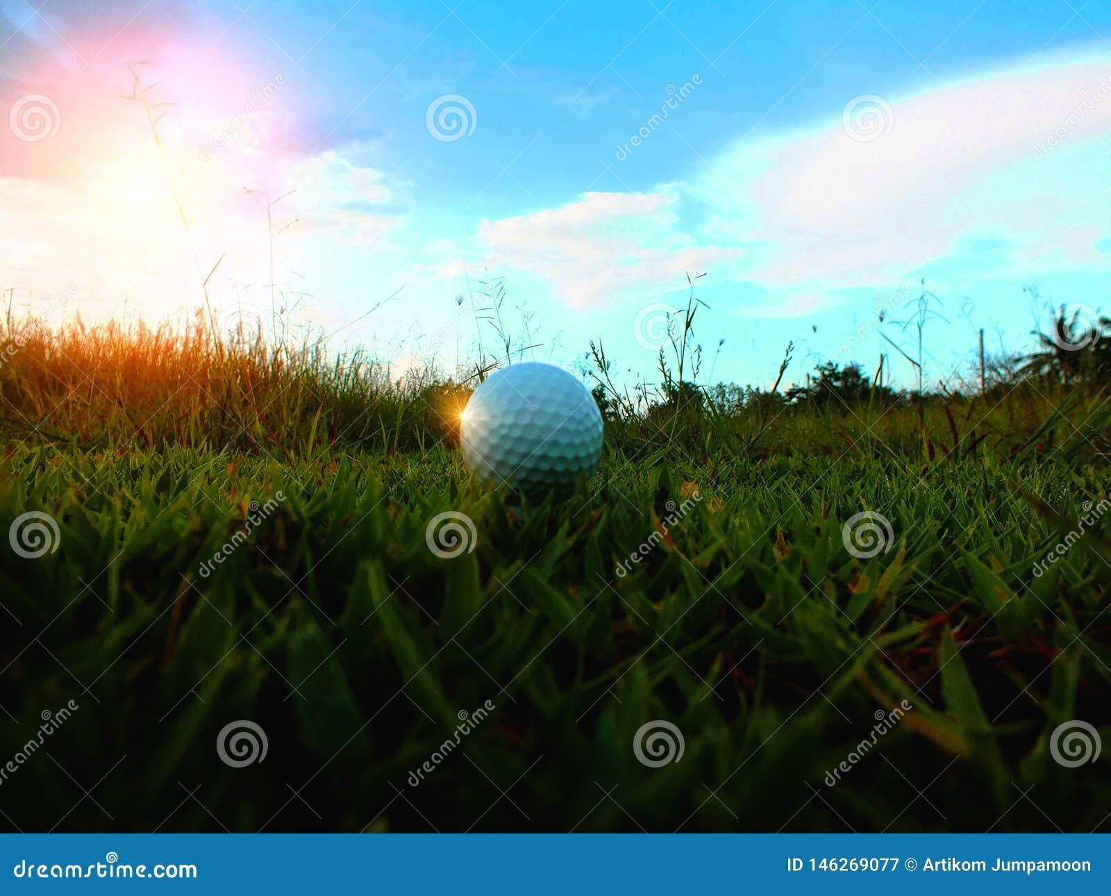 在一个绿色领域的高尔夫球在美好的自然本底