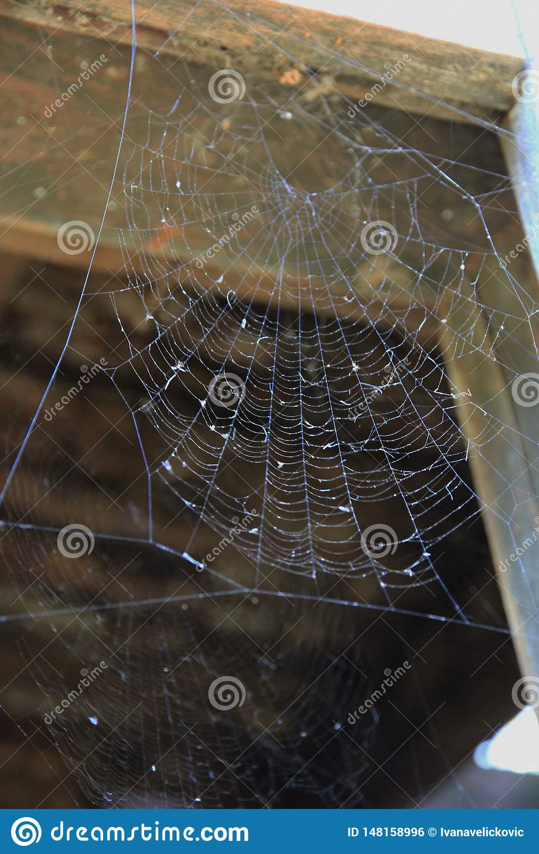 在一个老残破的窗口的蜘蛛网