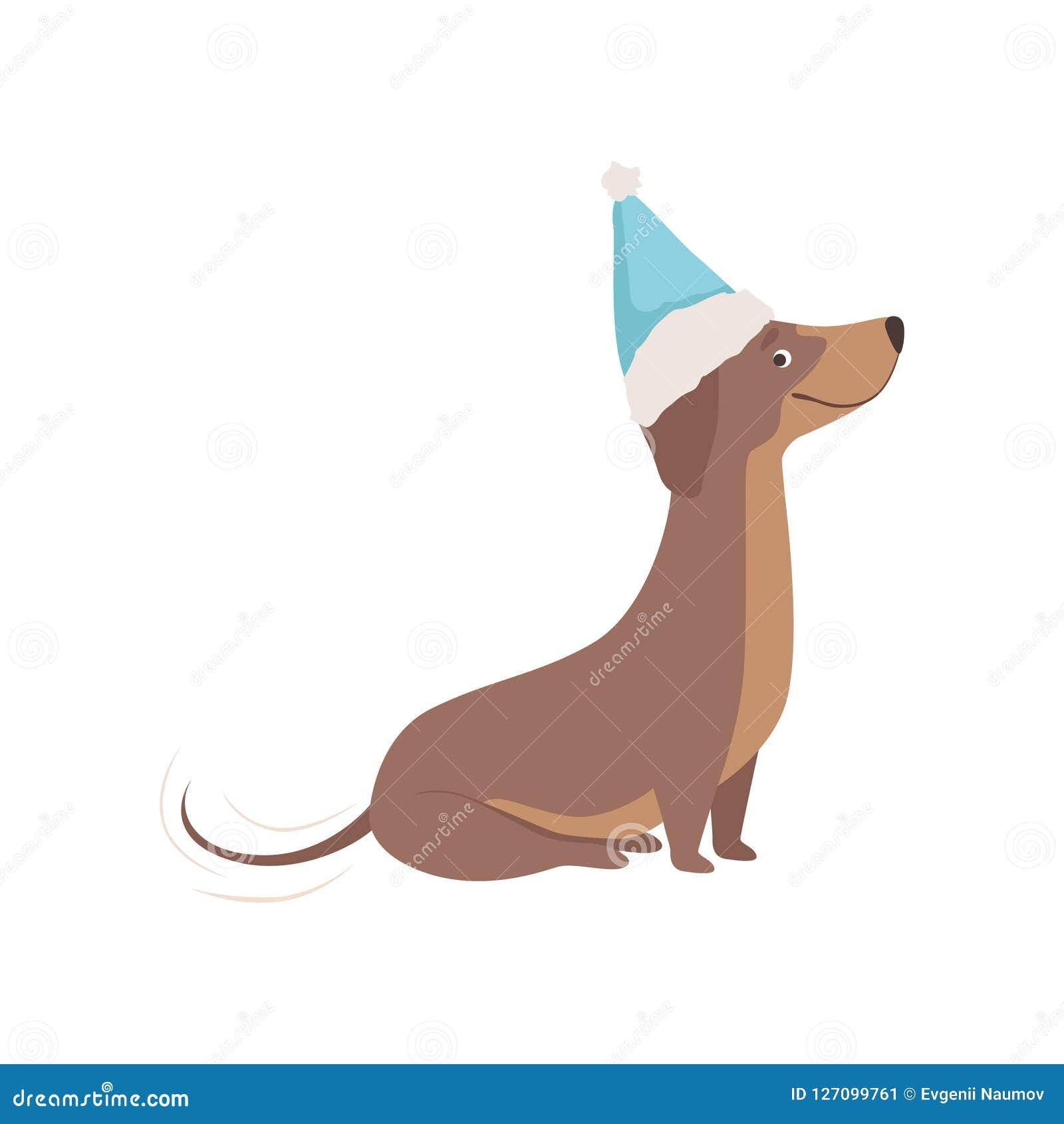 在一个蓝色圣诞老人帽子传染媒介例证的纯血统棕色达克斯猎犬狗在白色背景