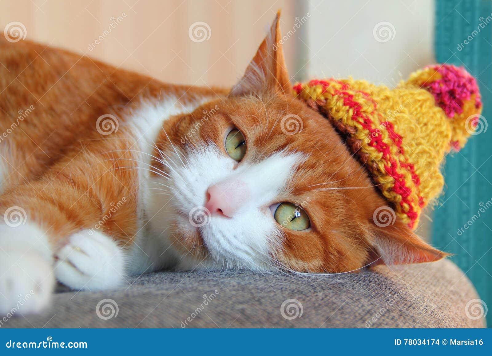 在一个被编织的帽子的逗人喜爱的猫