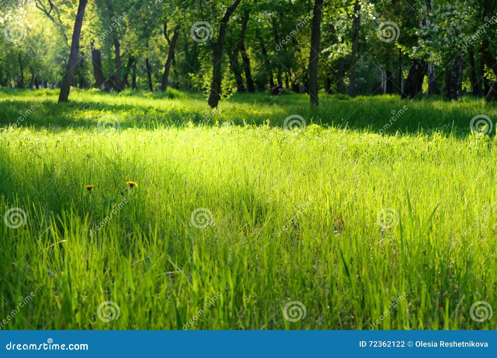 在一个晴朗的草甸的绿草