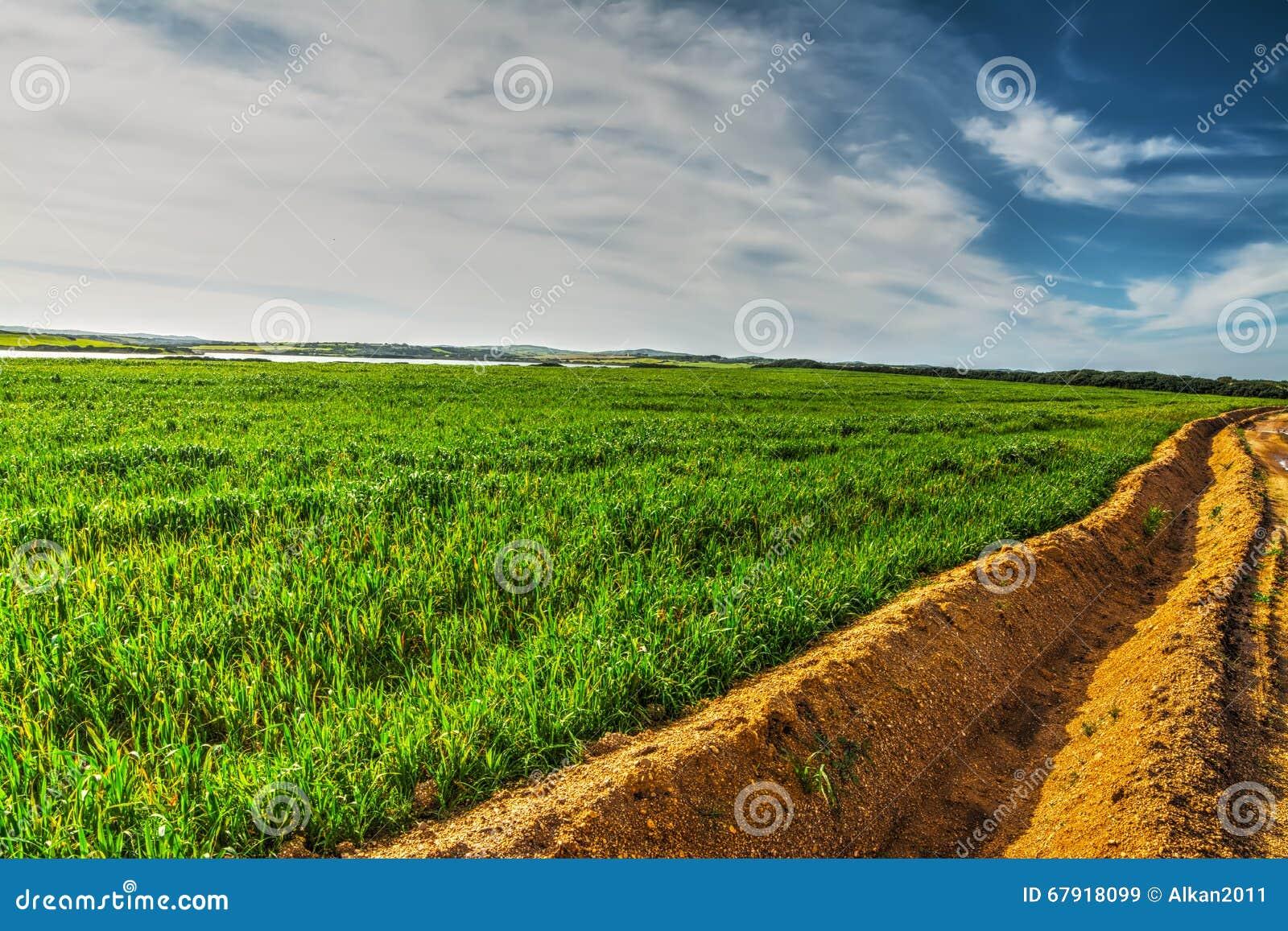 在一个绿色领域的犁沟