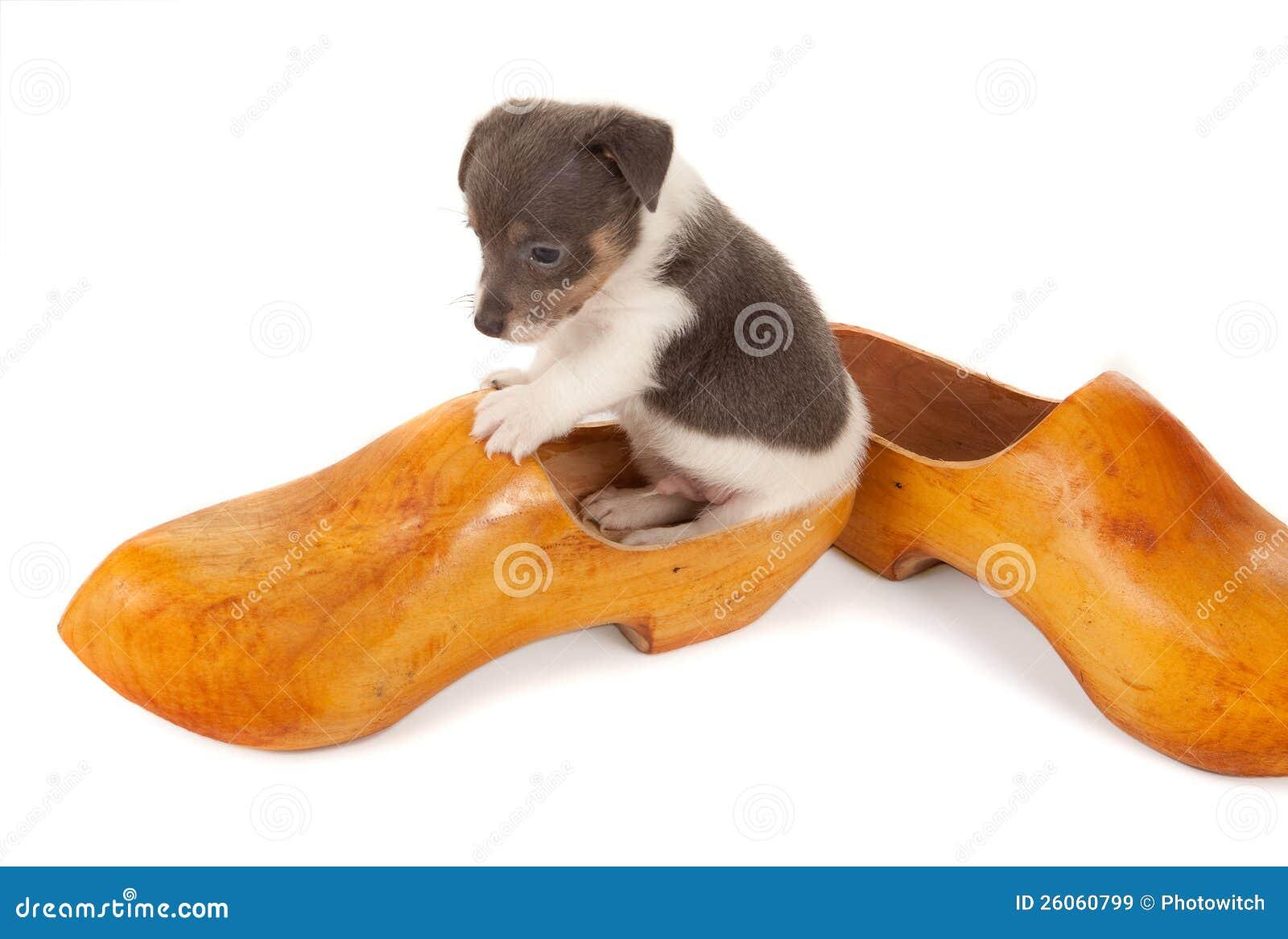 在一双木鞋子的小狗