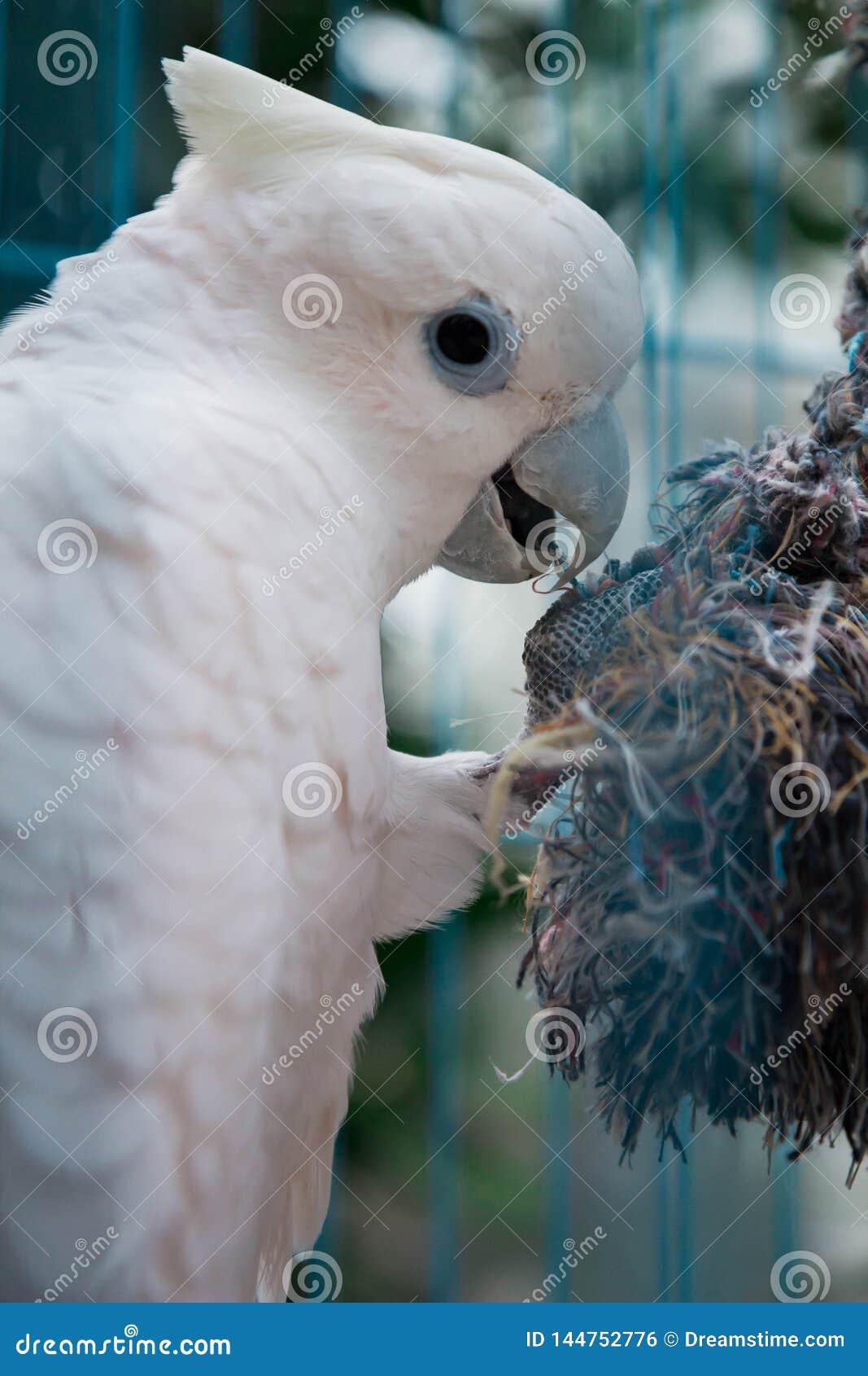 在笼子的大鹦鹉