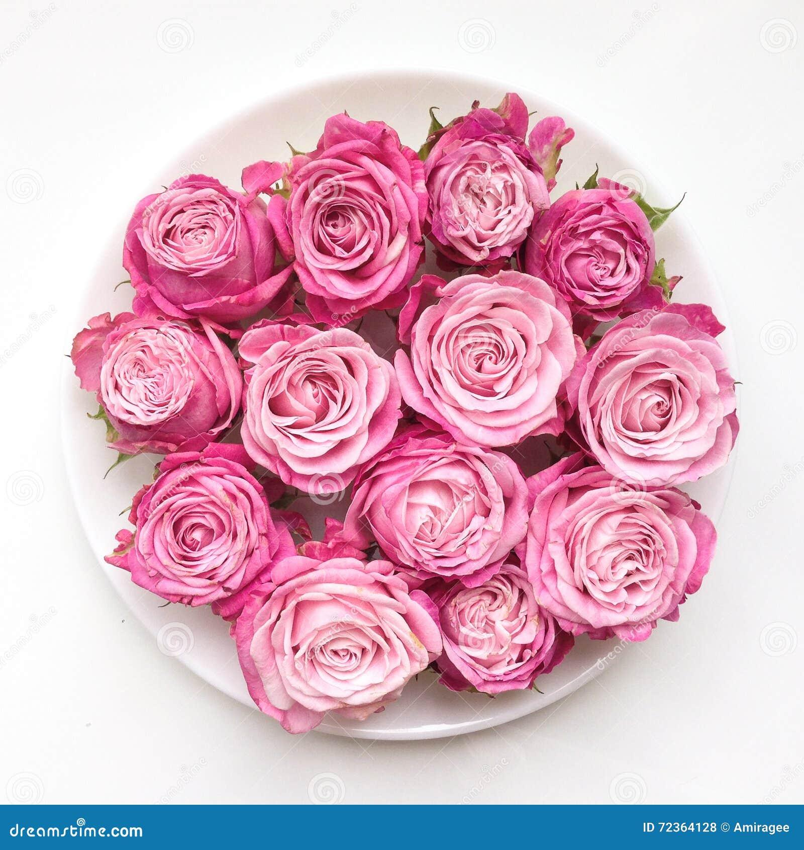 在一块板材的桃红色玫瑰在白色背景 平的位置