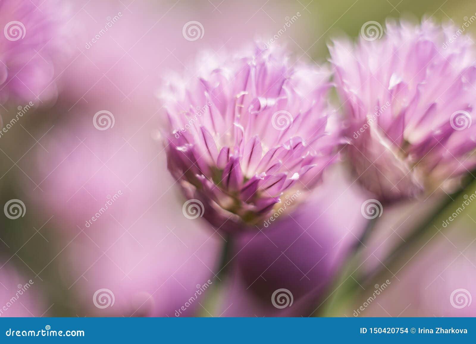在一朵淡紫色花的橙色蝴蝶,宏观射击,夏天好日子 o r bokeh,文本的空间