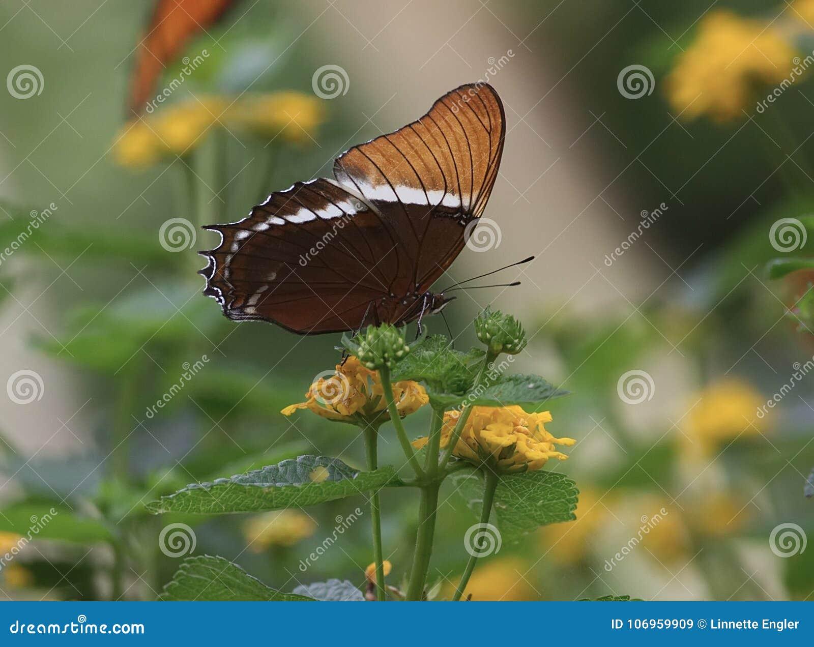 在一朵黄色花的生锈被打翻的蝴蝶