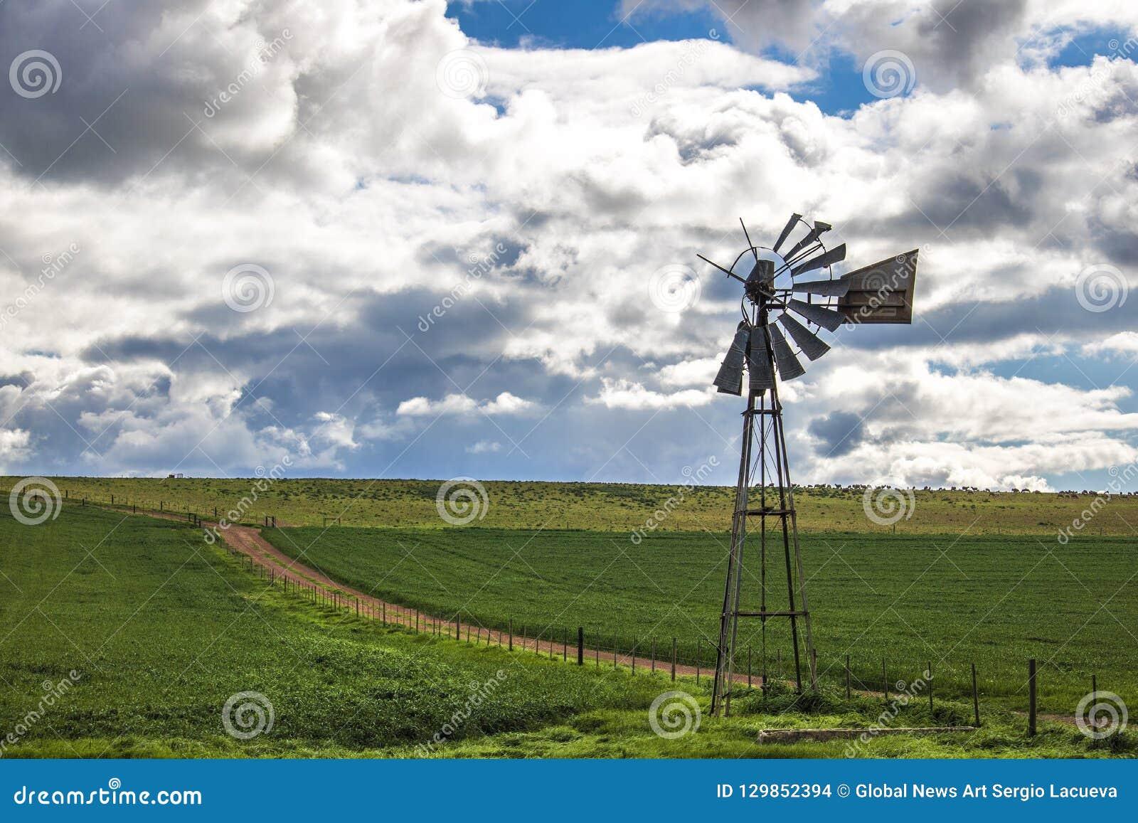 在一条土路旁边的风车在一个绿色领域在科里登,西开普省,南非