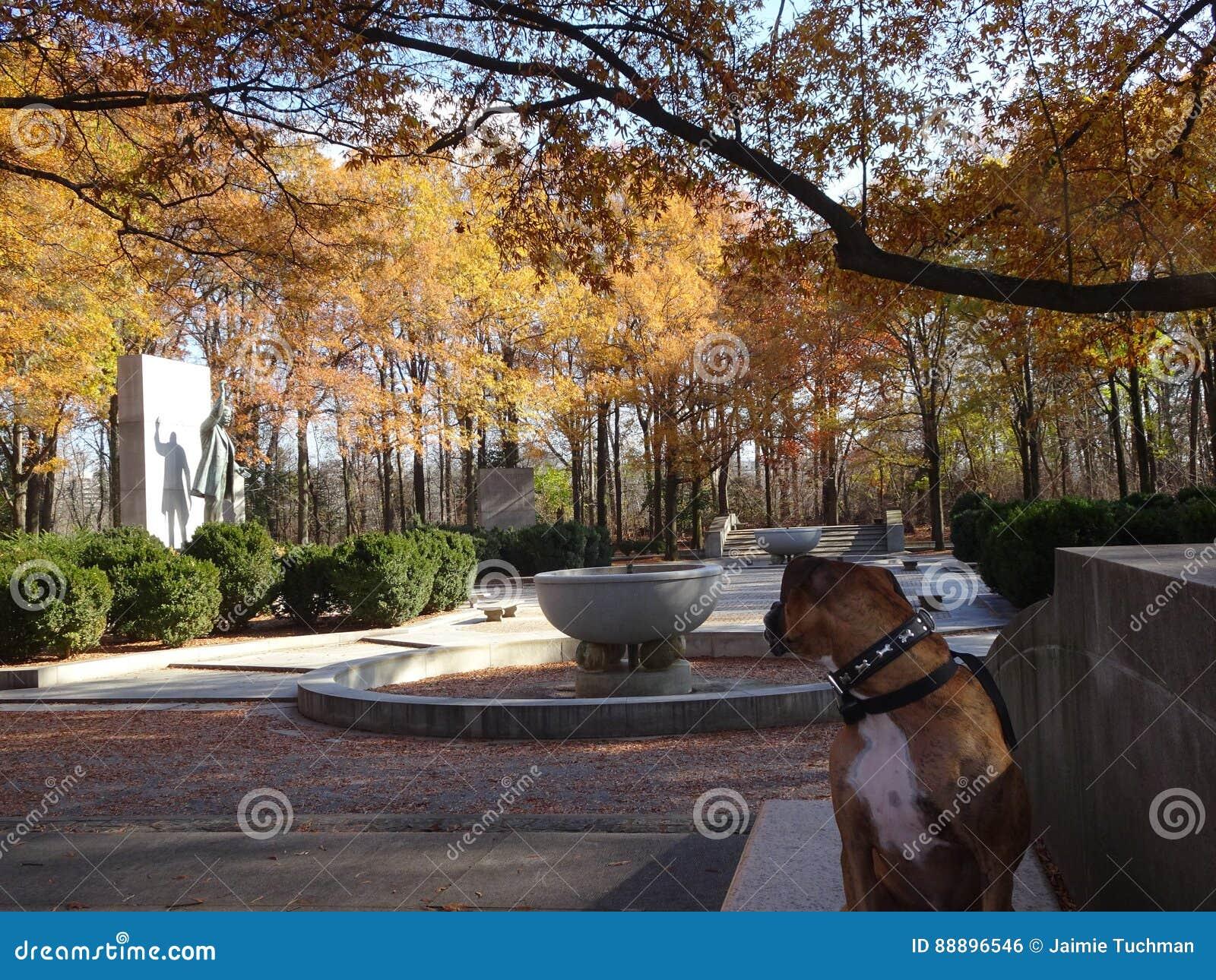 在一条长凳的狗在秋天