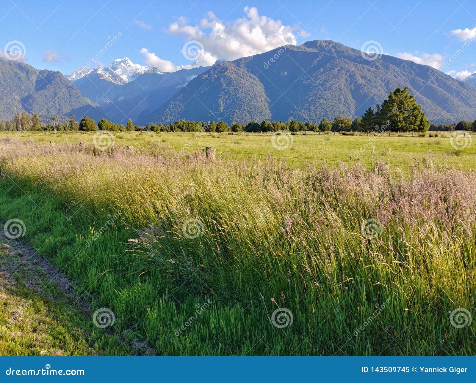 在一片巨大的草原后的Aoraki库克山