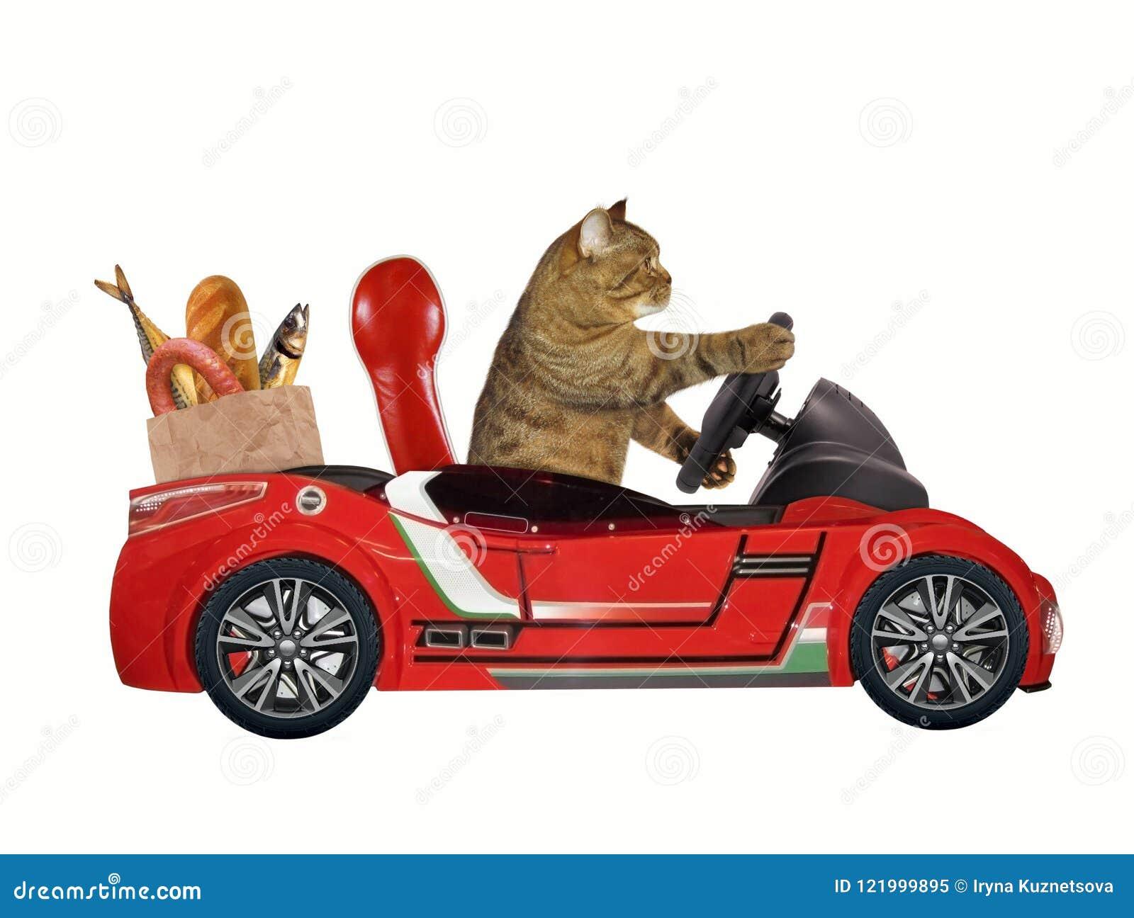 在一辆红色汽车1的猫