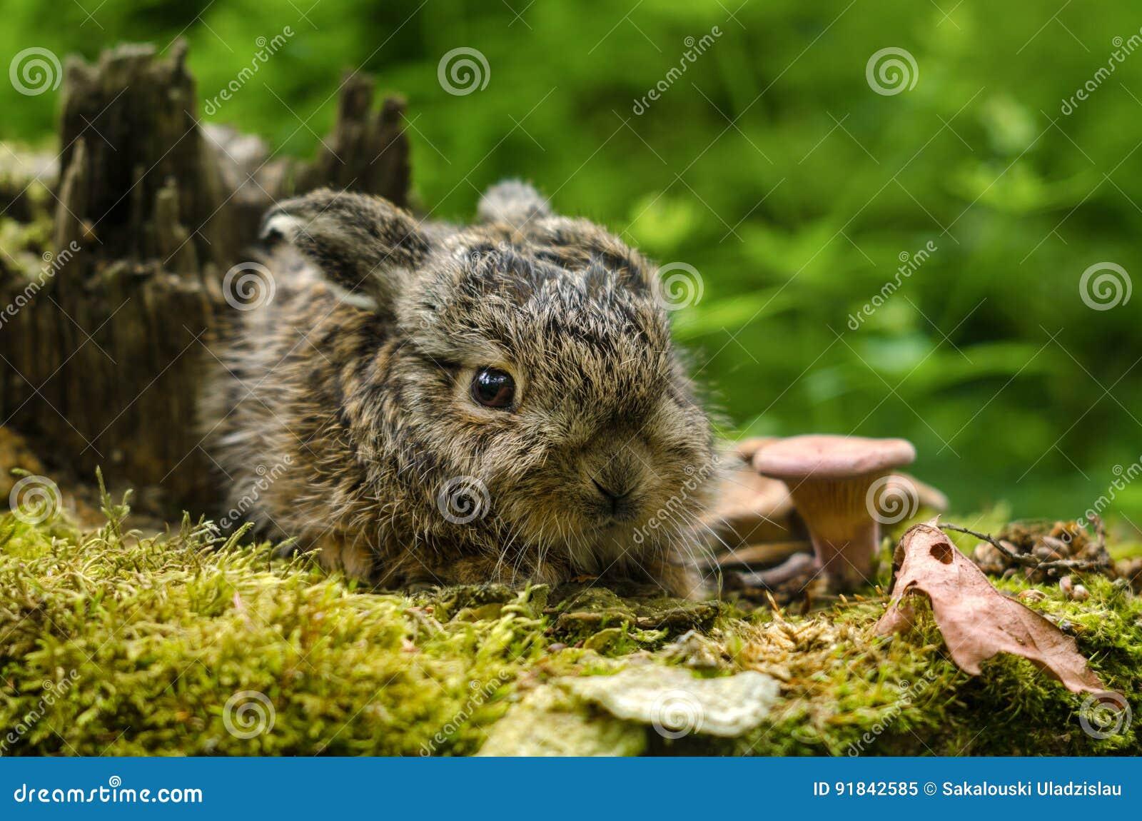 在下落的叶子和蘑菇中的美丽的新出生的小兔子