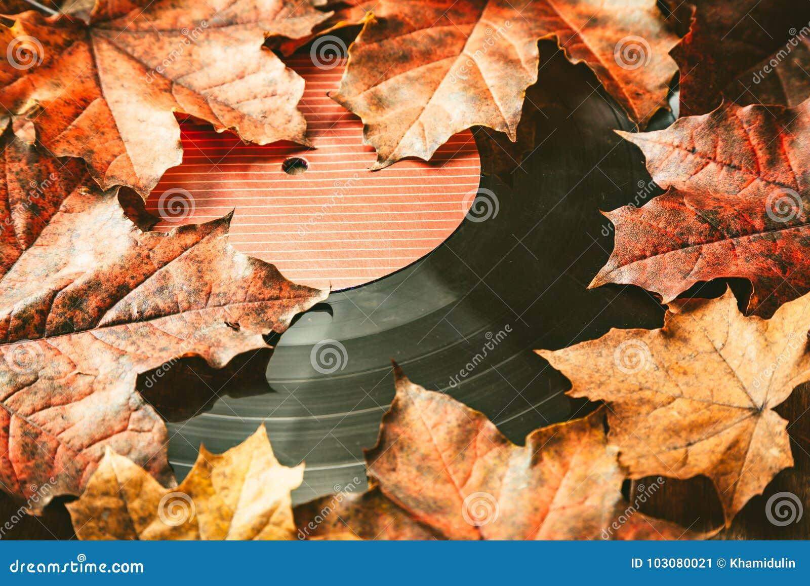 在下落的秋天叶子的Gramplastine