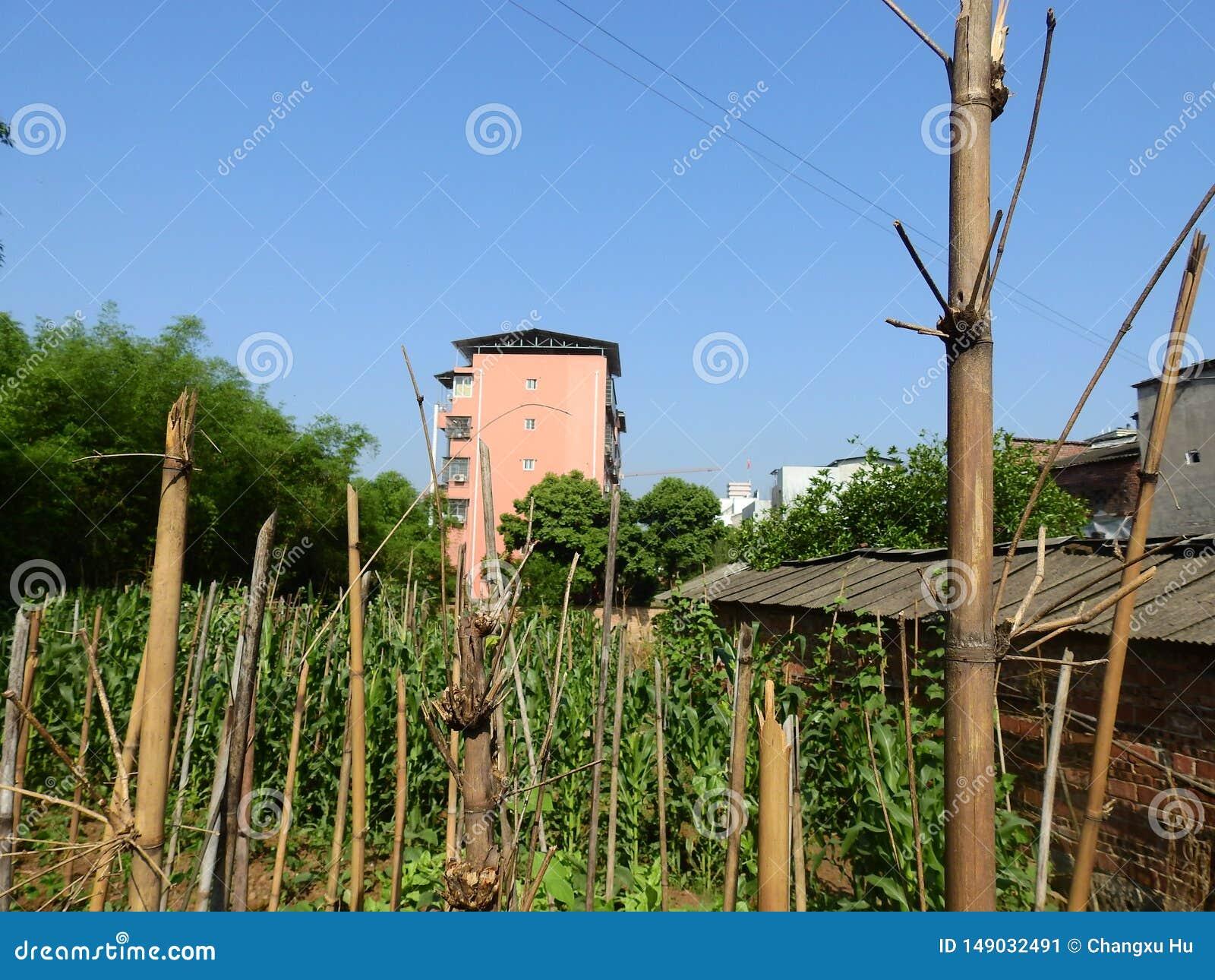 在中国农村的高楼