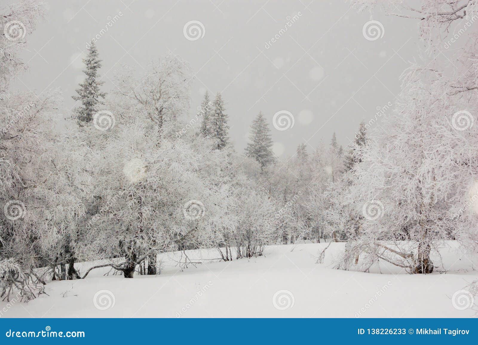 在乌拉尔山脉的冬天