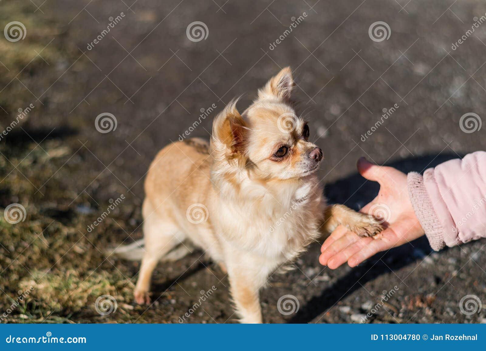 在人和小狗之间的友谊,震动手和爪子