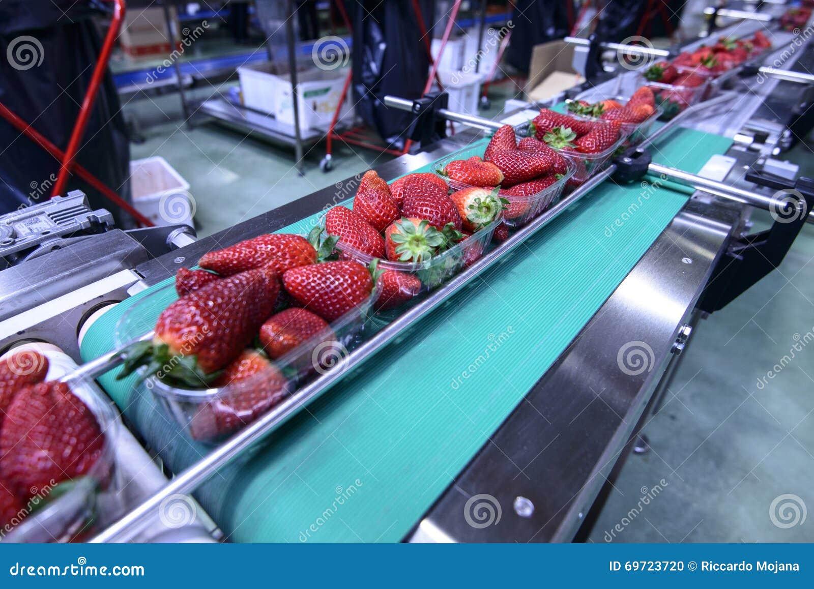 在传送带的草莓