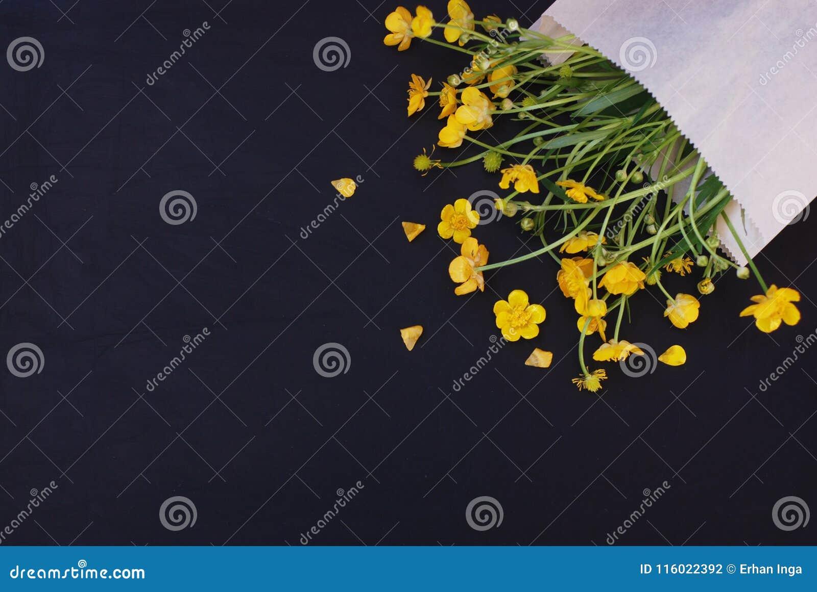在信封深蓝黑背景舱内甲板的黄色小的花放置拷贝空间