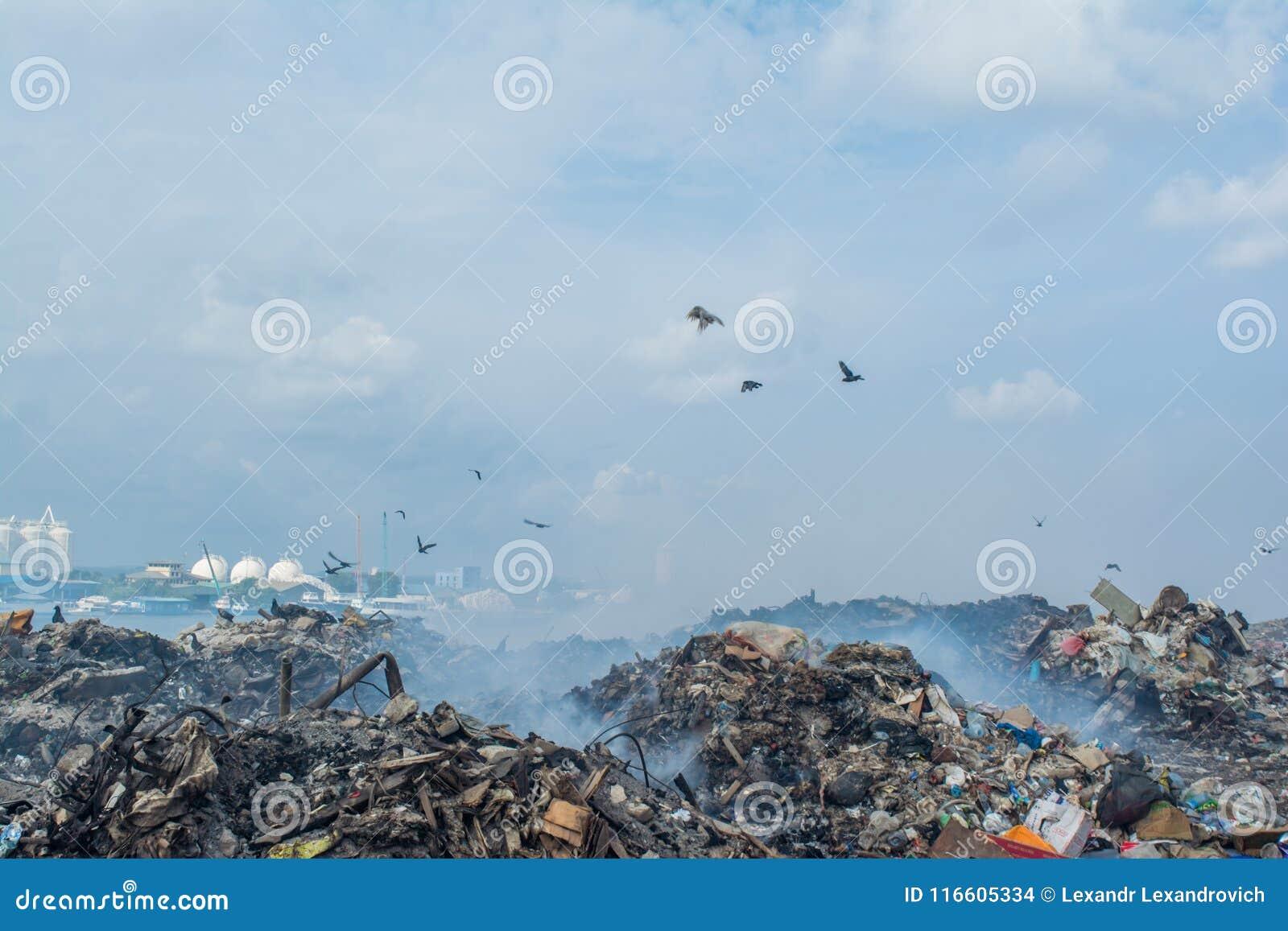 在充分垃圾堆的鸟烟、废弃物、塑料瓶、垃圾和垃圾在热带海岛