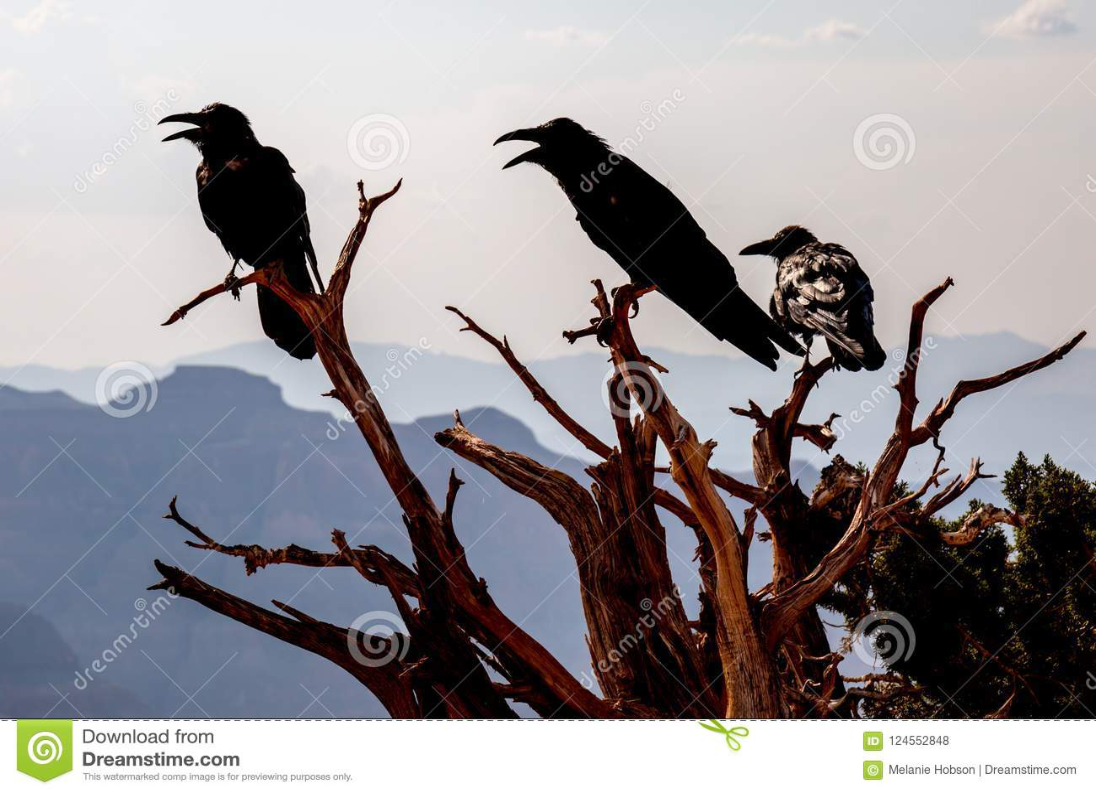 在光秃的树枝的现出轮廓的鸟