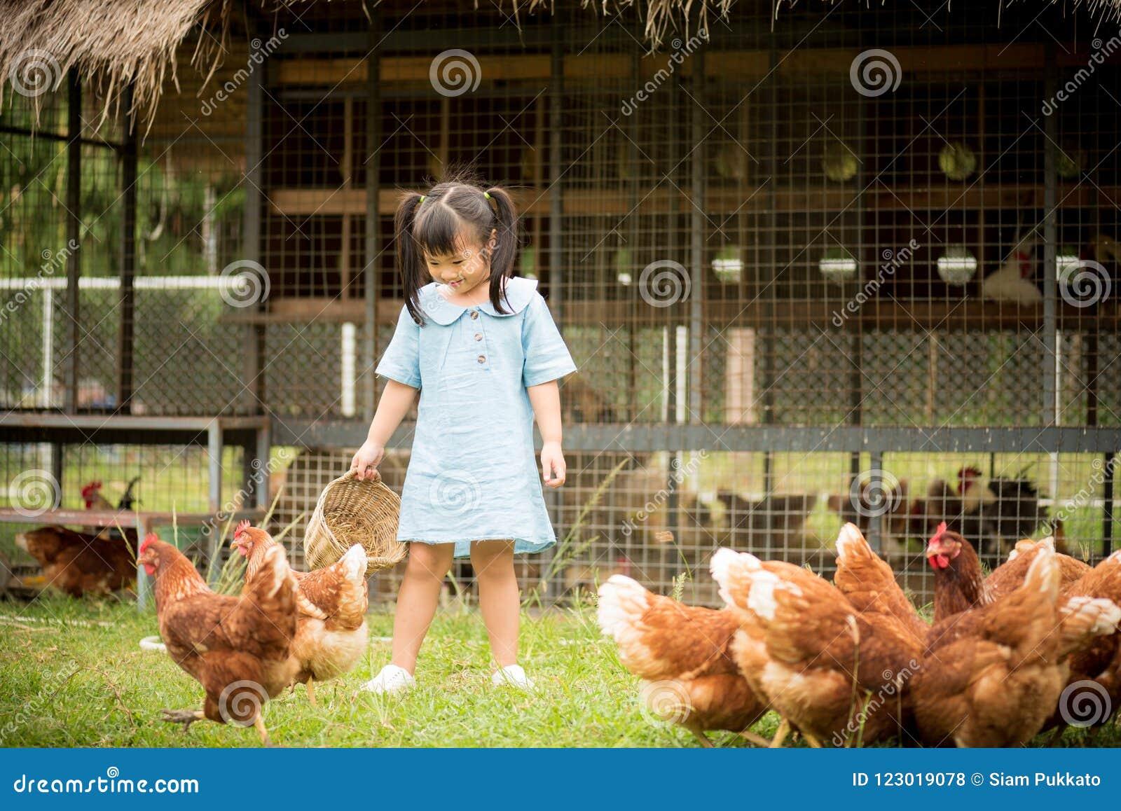 在养鸡场前面的愉快的小女孩哺养的鸡