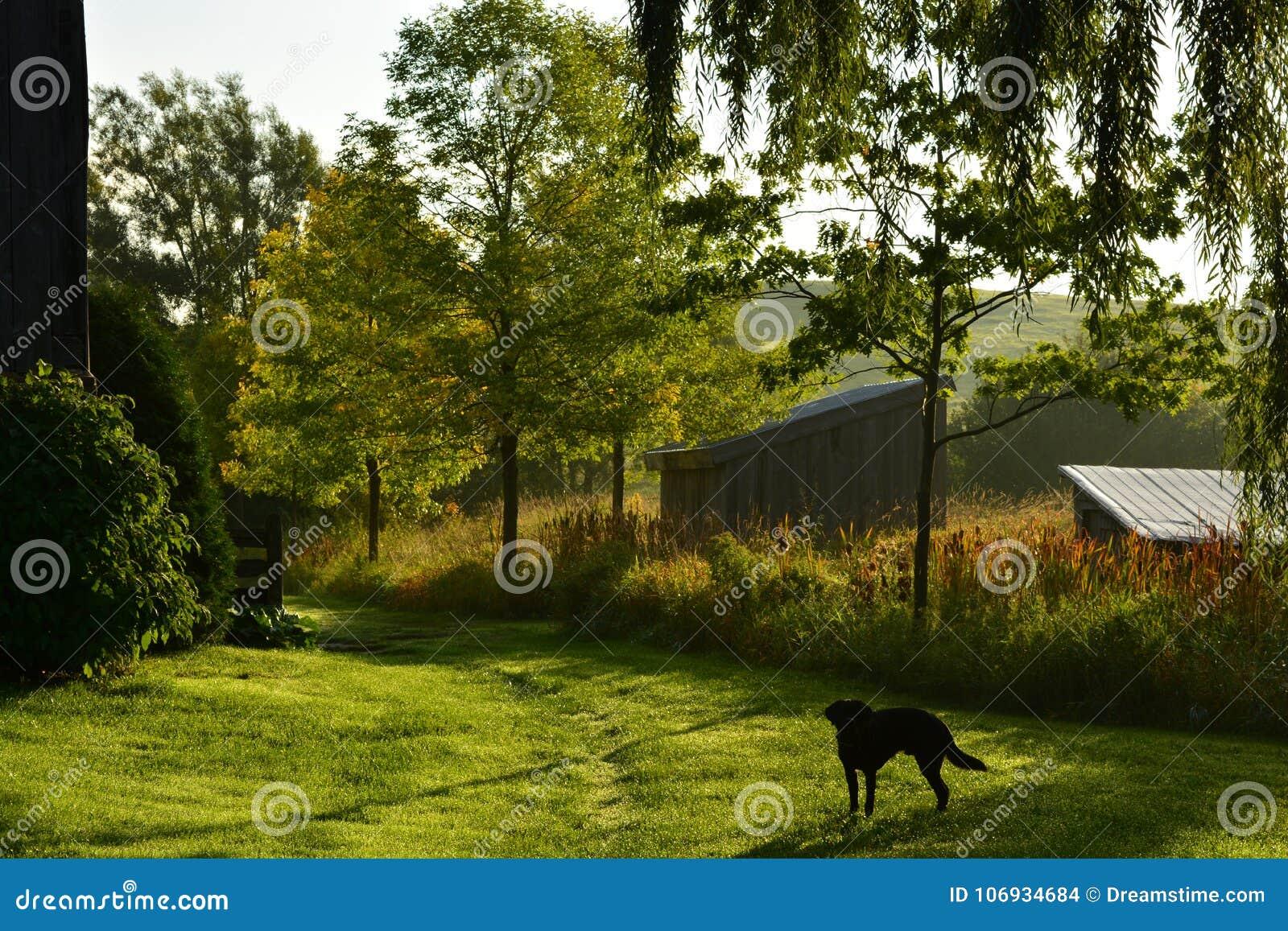 在农场的早晨步行