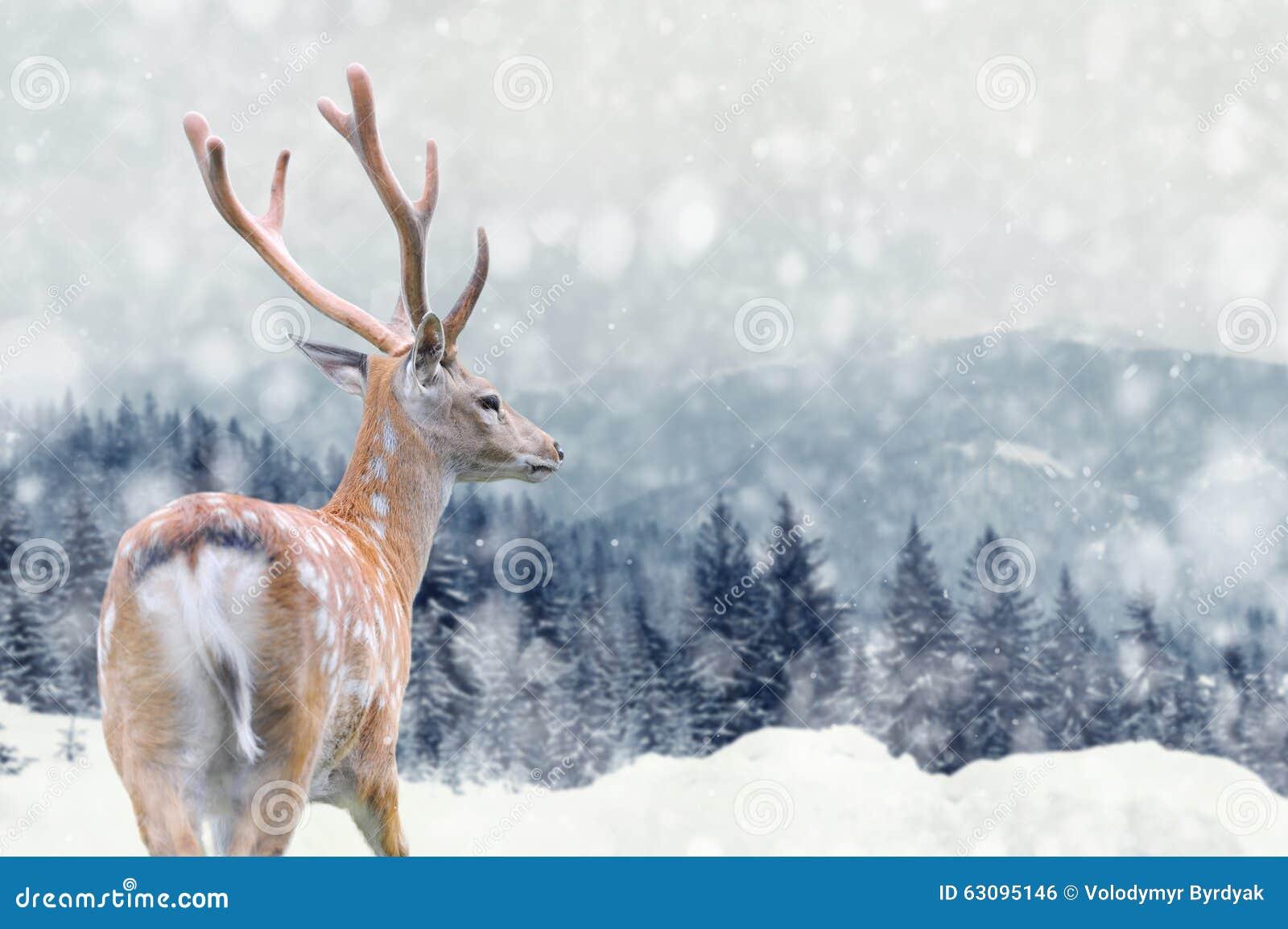 在冬天背景的鹿