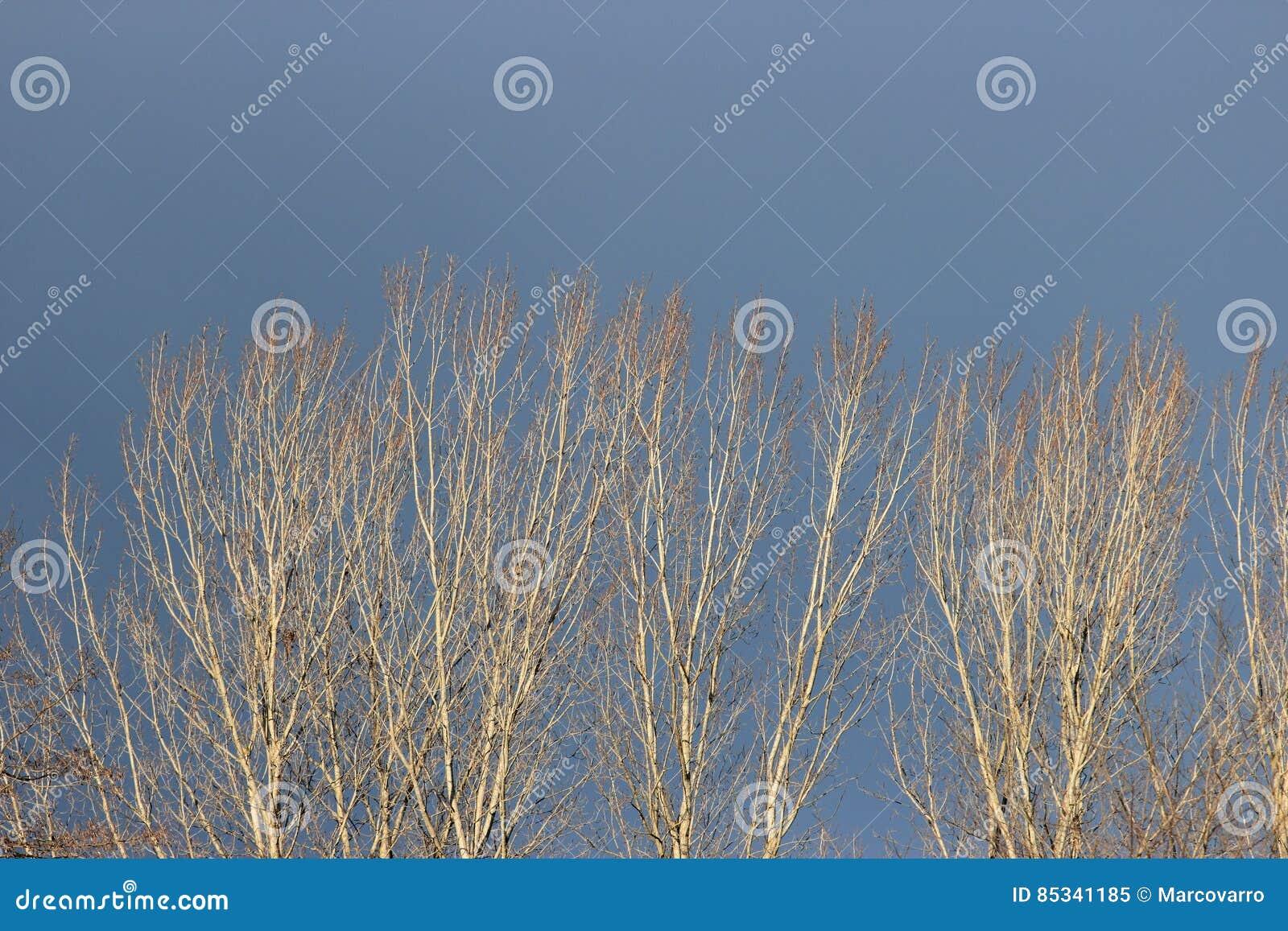 在冬时的树上面