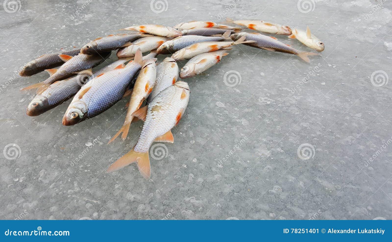 在冰的冬天捕鱼