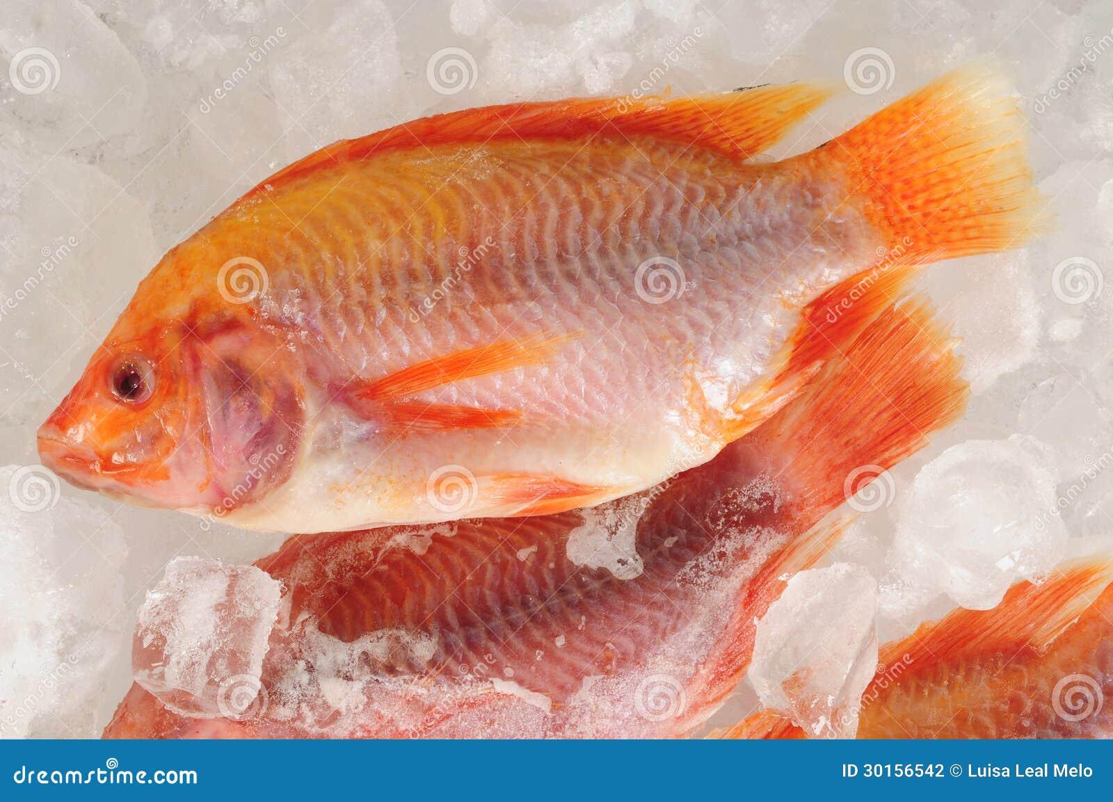 梦见鱼被冻在冰里