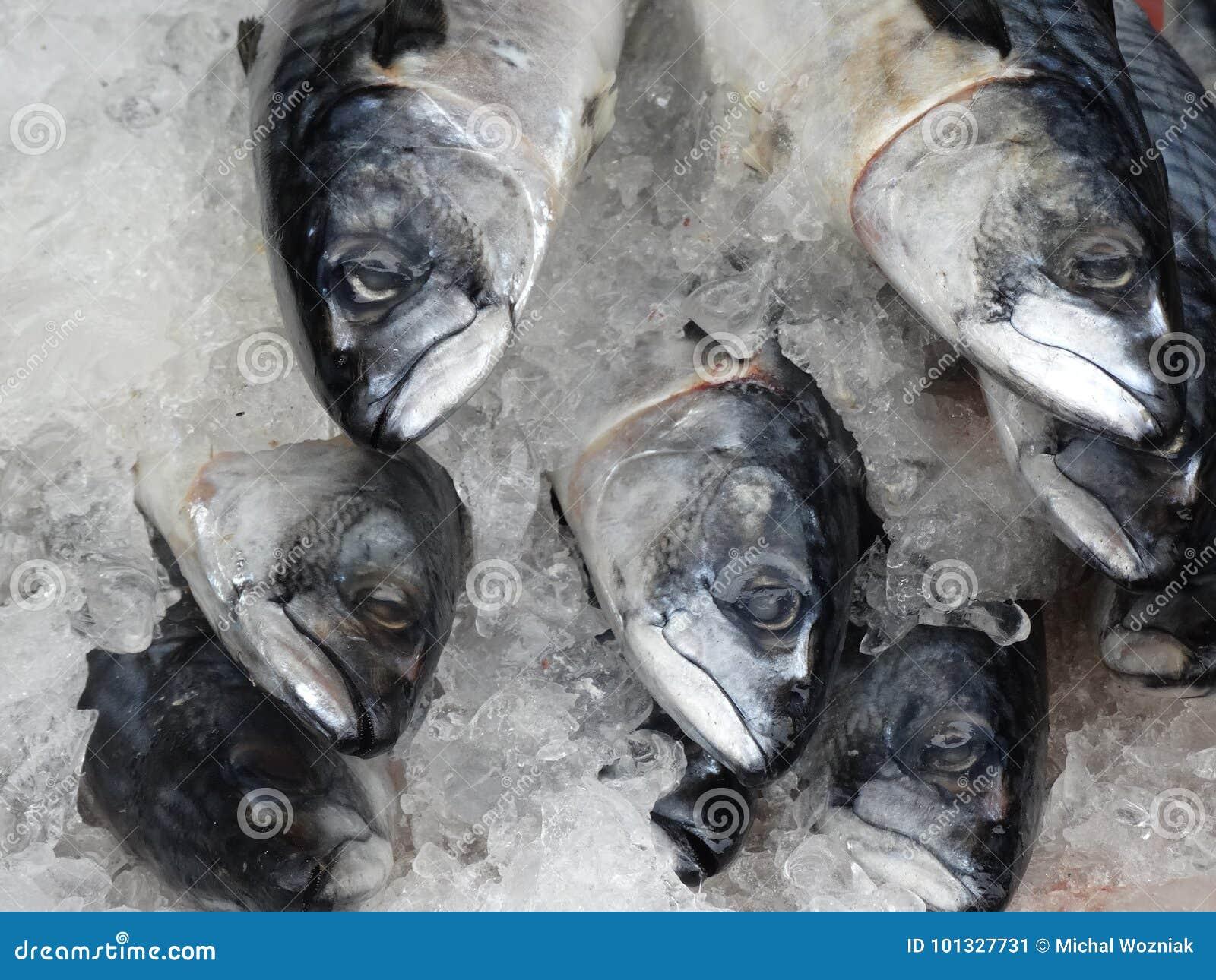 在冰的鱼在市场上