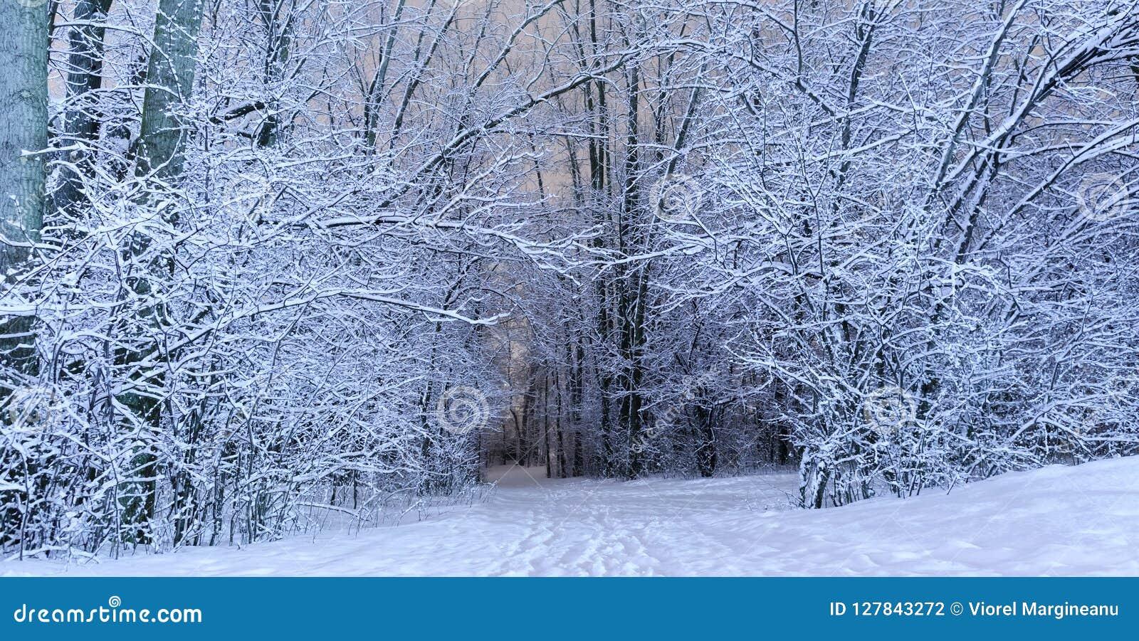 在冷的季节的一个冬天风景风景 美妙的白色前面