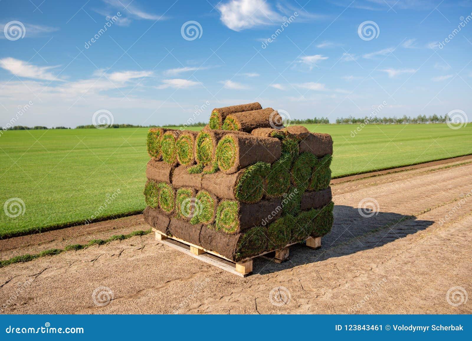 在准备堆积的草皮劳斯准备好在地面草坪被放置