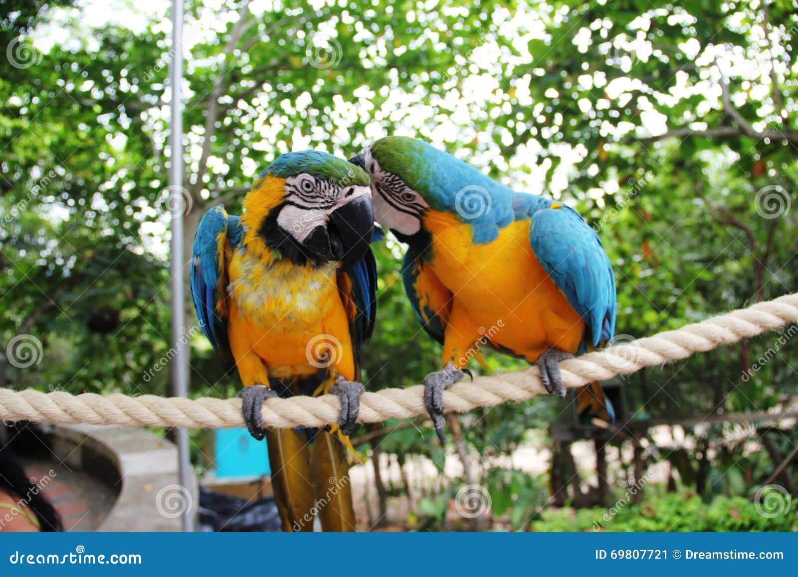 在分支的两只鹦鹉沟通