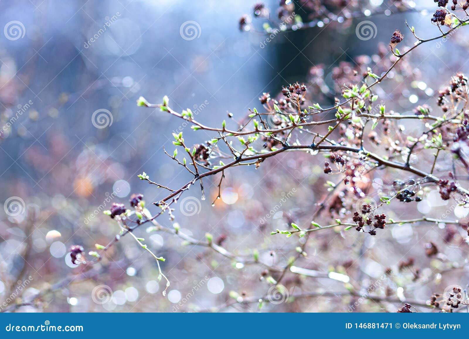 在分支的春天芽,在色的背景 r E r