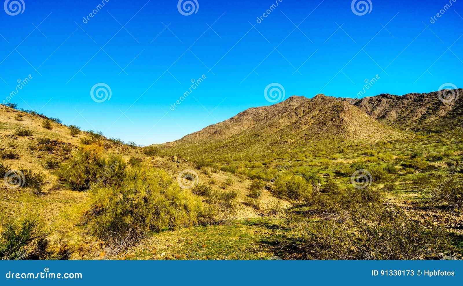在南山公园山的圣胡安路径源头附近离开风景用沿全国足迹的柱仙人掌仙人掌