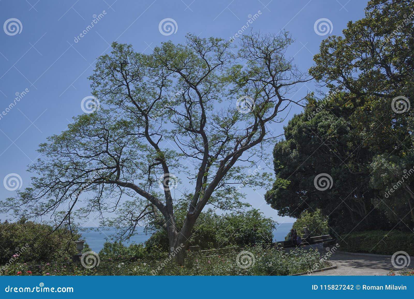 在南海岸的美丽的农村山路与在前景的一棵树