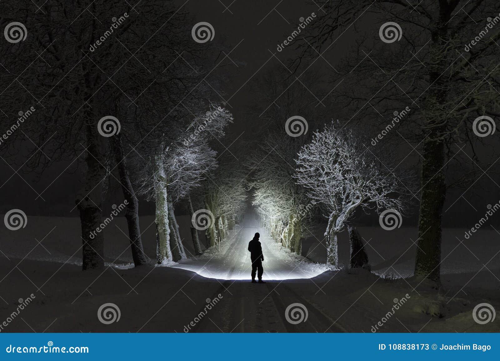 在发光与手电的树胡同的晚上供以人员身分户外