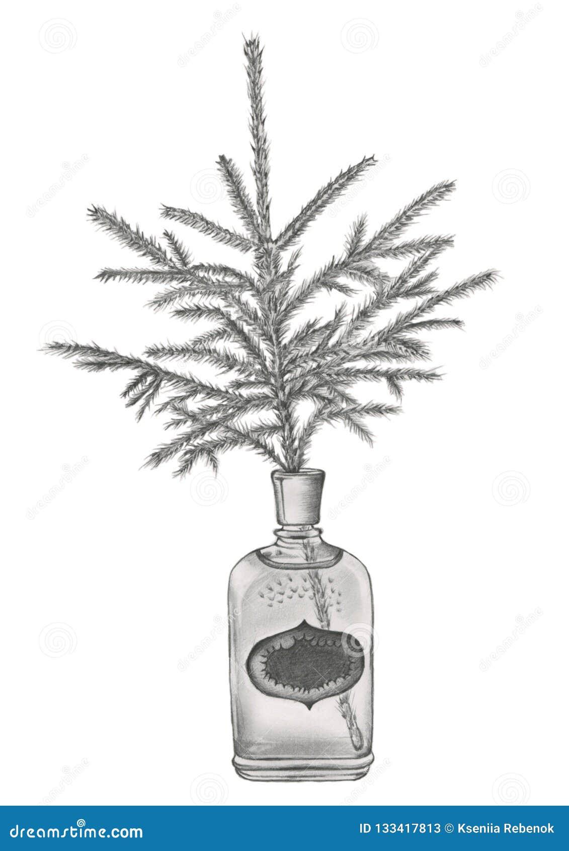 在古板的香水瓶的一个云杉的分支