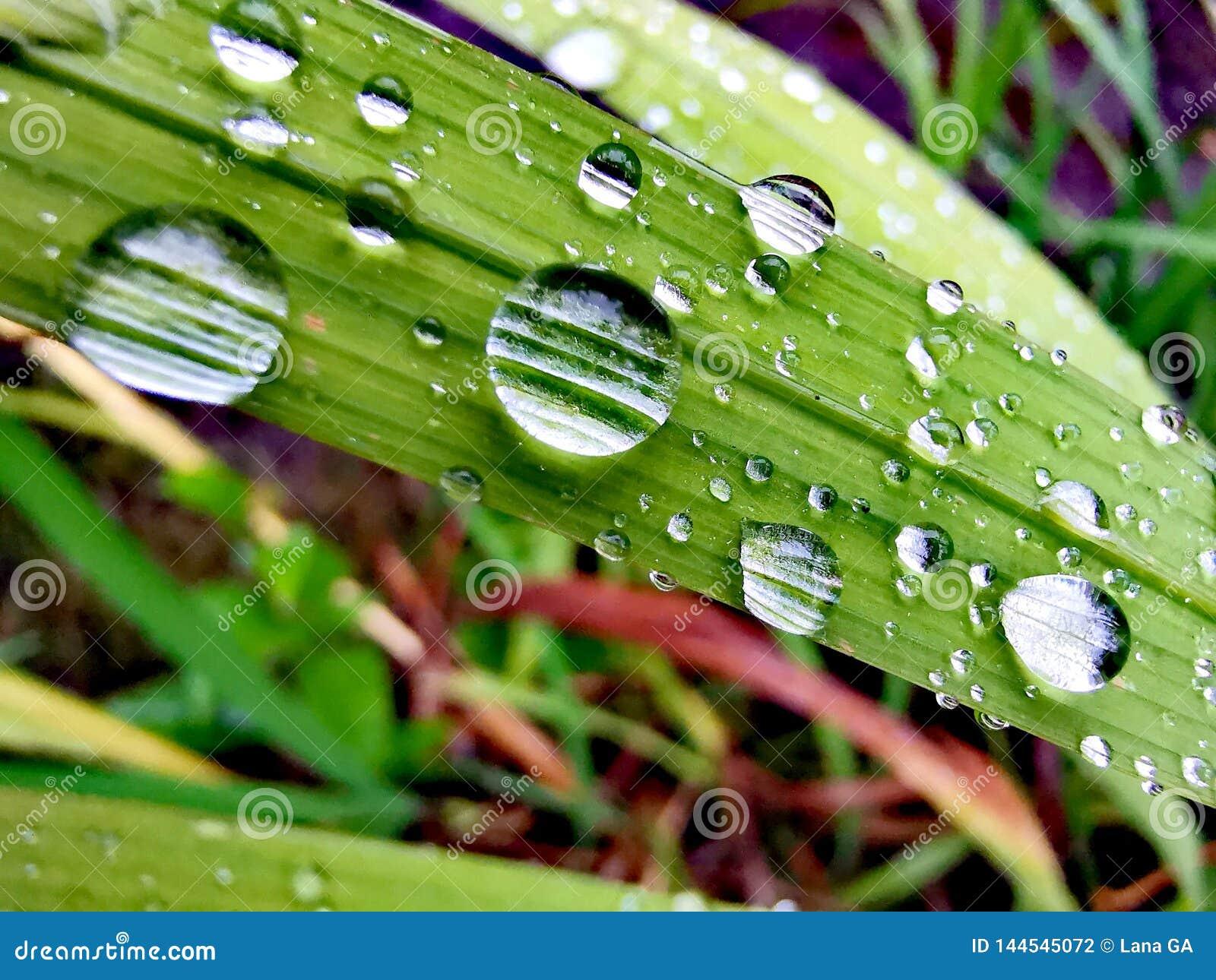 在叶子的雨珠