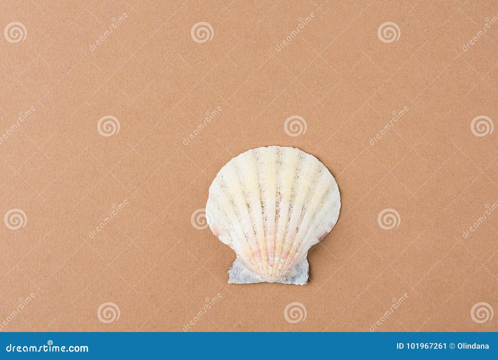 在咖啡颜色布朗背景的唯一半舱内甲板圈子海壳 最低纲领派现代样式 质朴的时髦颜色 Pos的模板