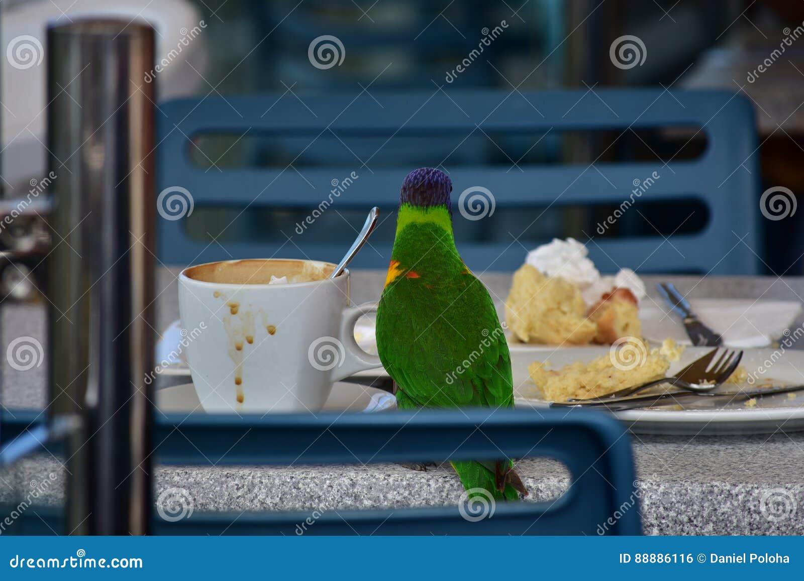 在咖啡馆桌上的彩虹lorikeet