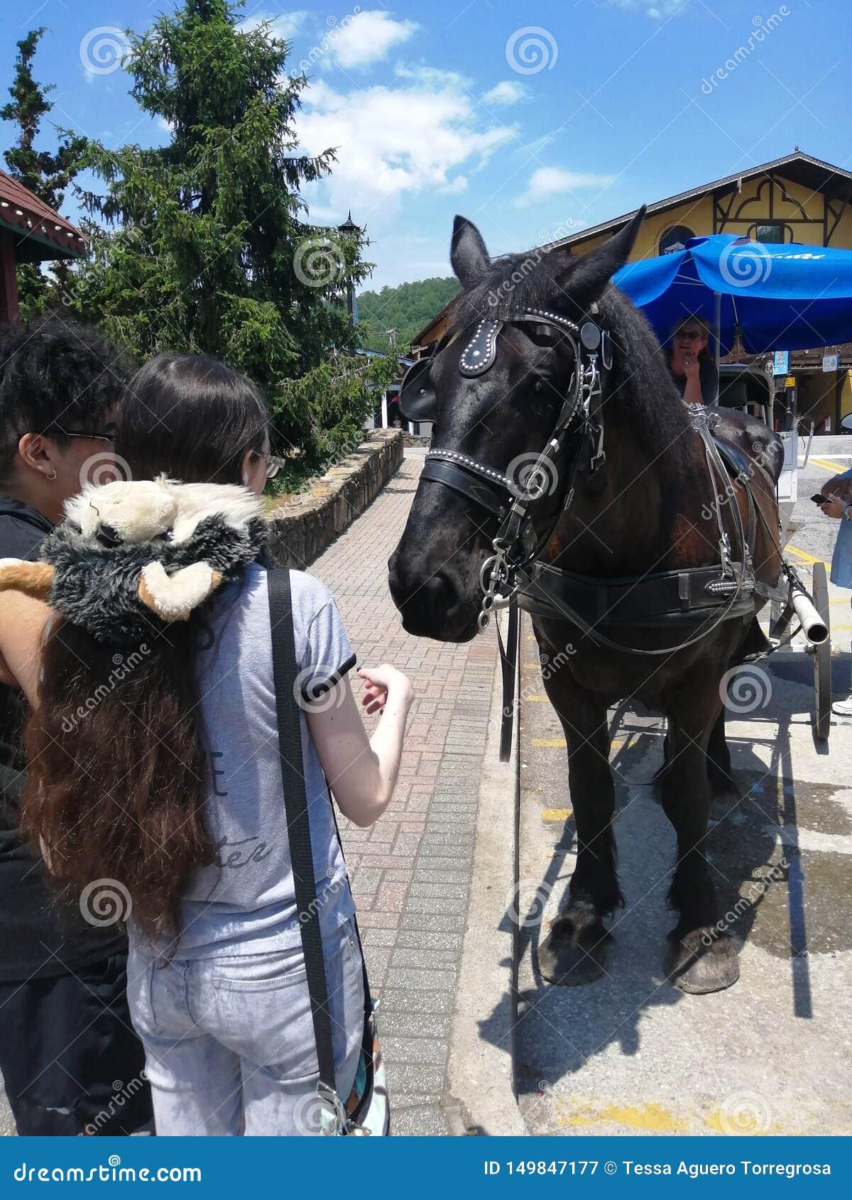 在喂养在夏天旅行的Hellen市一匹马