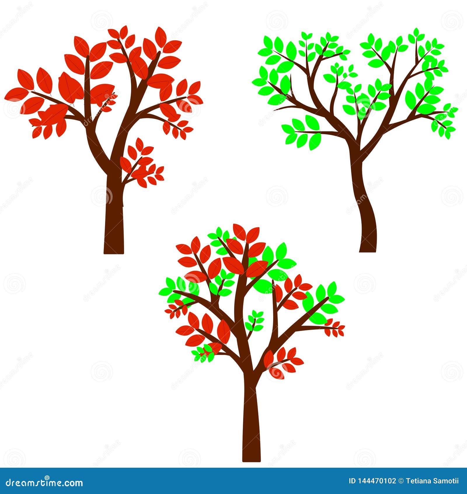 在四个季节的落叶树-春天,夏天,秋天,冬天 本质和生态 风景设计或公园的自然物