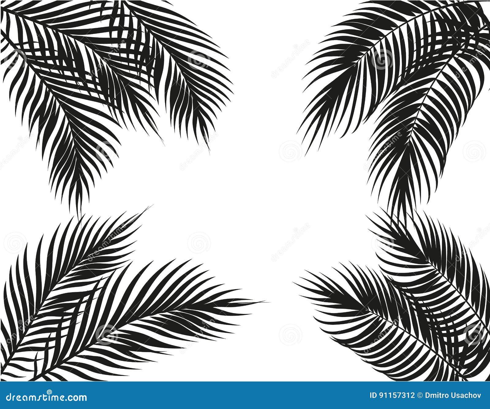 在四边的热带黑白棕榈叶 集合 背景查出的白色 例证