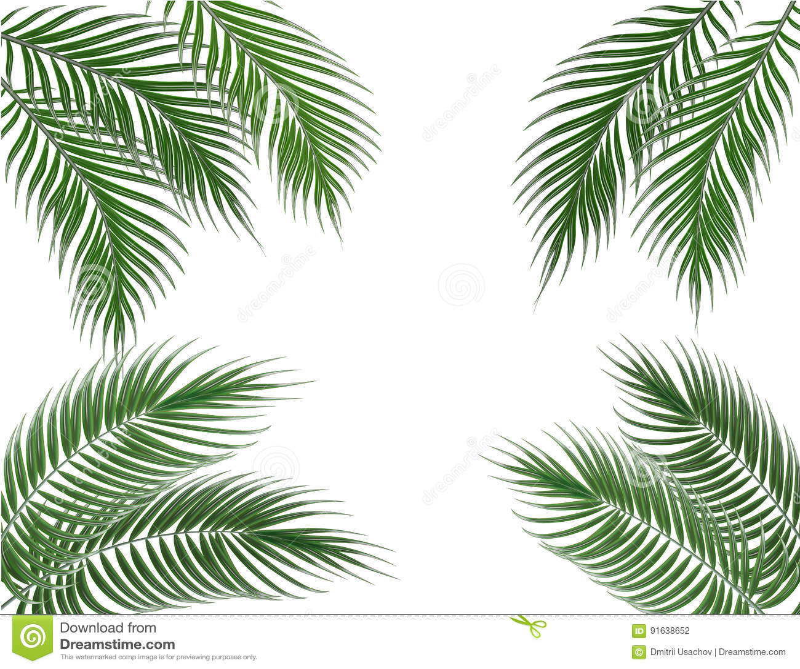 在四边的热带绿色棕榈叶 集合 背景查出的白色 例证